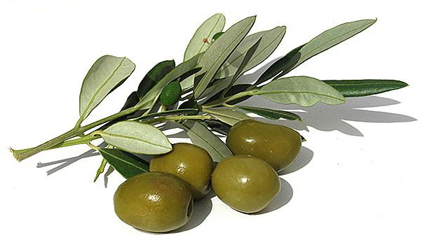 Olivový olej Glafkos